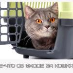 Кое-что об уходе за кошками