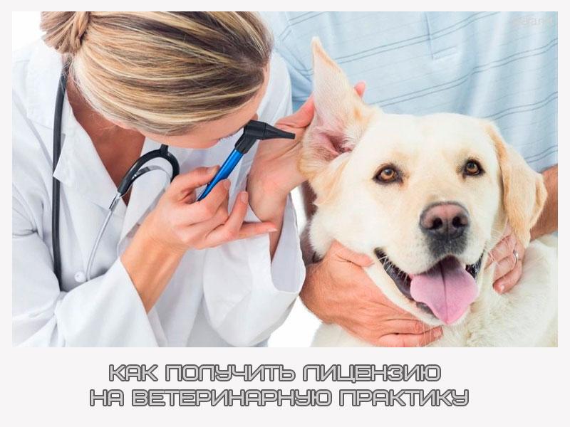 Как получить лицензию на ветеринарную практику