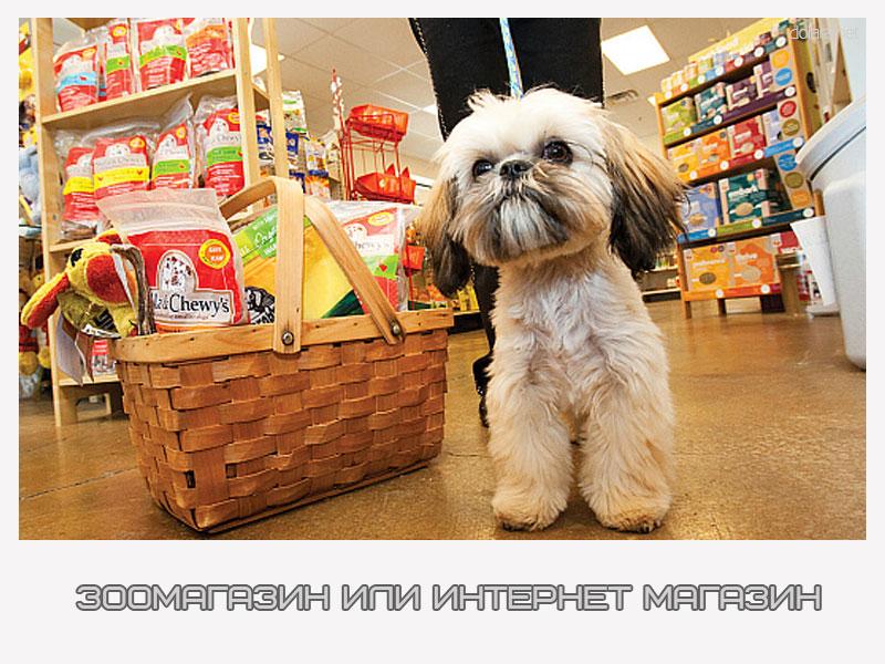Зоомагазин или интернет магазин